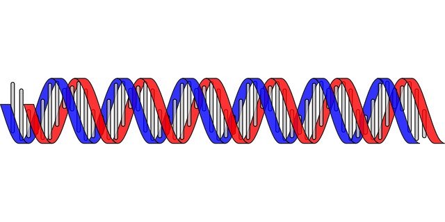 dna-304162_640.png